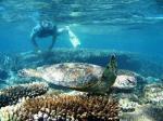 Ningaloo Reef snorkelling